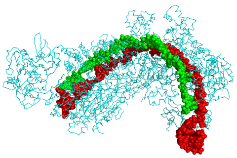 Crystal structure of a CRISPR RNA-guided surveillance complex.