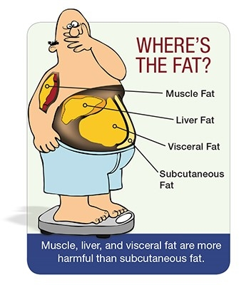 Know Someone With A Big Gut And Skinny Legs Center For Science