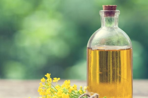 Does canola oil cause dementia?
